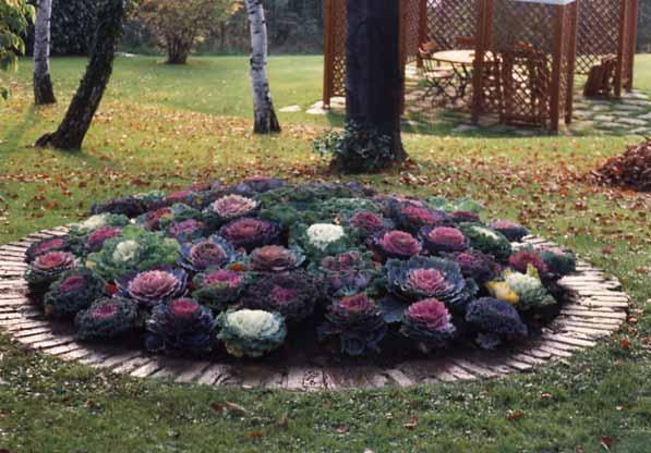 Davanzo giardini le aiuole for Aiuole perenni